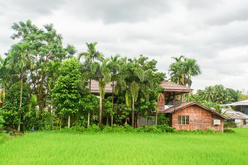 Tappningträhus i risjordbruksmark royaltyfri foto