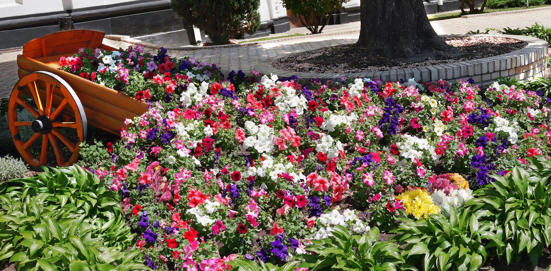 Tappningvagnen, färgrika blommor, parkerar panorama arkivbild