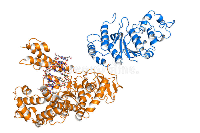 Taq聚合酶 向量例证