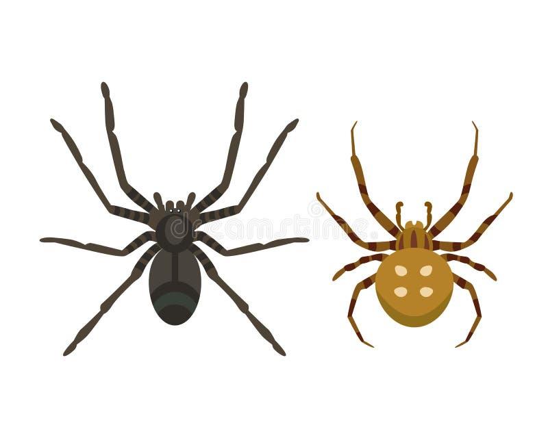 Tarântula venenosa animal assustador lisa gráfica do horror do perigo do inseto da fobia da natureza do projeto do medo do aracní ilustração do vetor