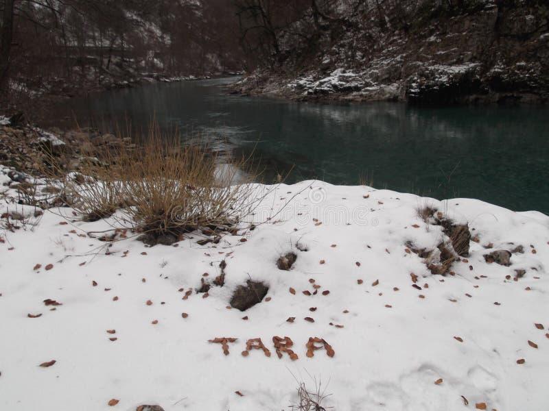 Tara River imagen de archivo