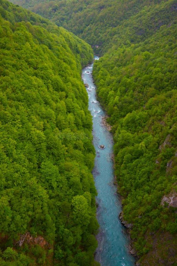 Tara rivier in de lente, Montenegro stock afbeelding