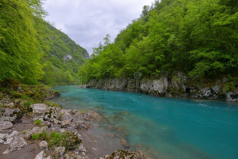 Tara rivier in de lente, Montenegro stock fotografie