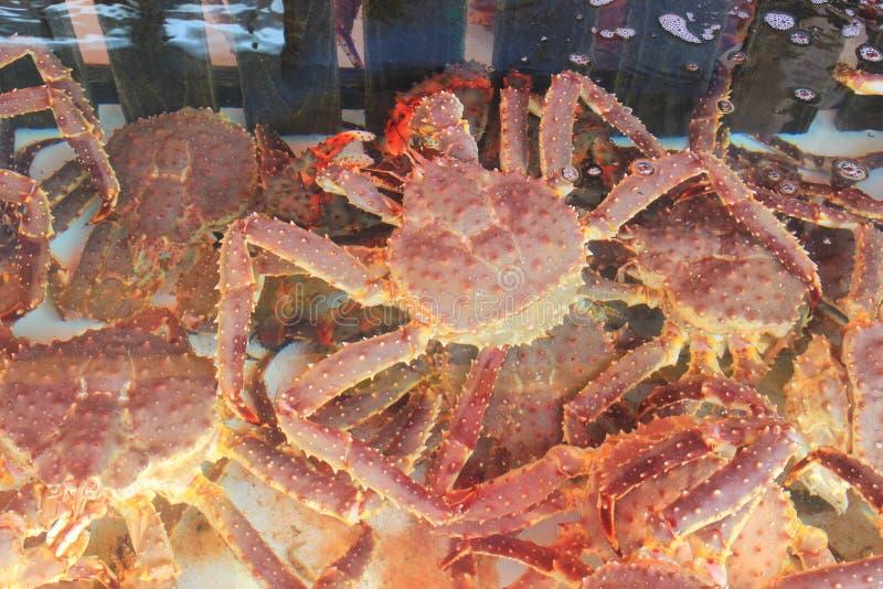 Taraba sea king crabs in the fish market. Hokkaido, Japan royalty free stock photo
