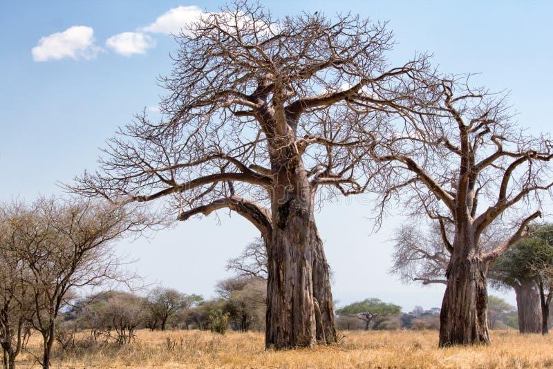 Tarangire National Park royalty free stock images