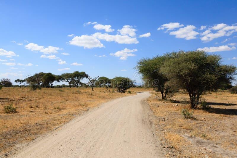 Tarangire National Park landscape, Tanzania, Africa. African safari. Dirt road in Tarangire National Park , Tanzania landscape, Africa, adventure, baobab, clear stock photography