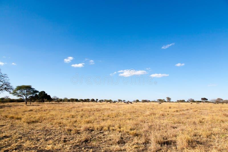 Tarangire National Park panorama, Tanzania, Africa stock photos