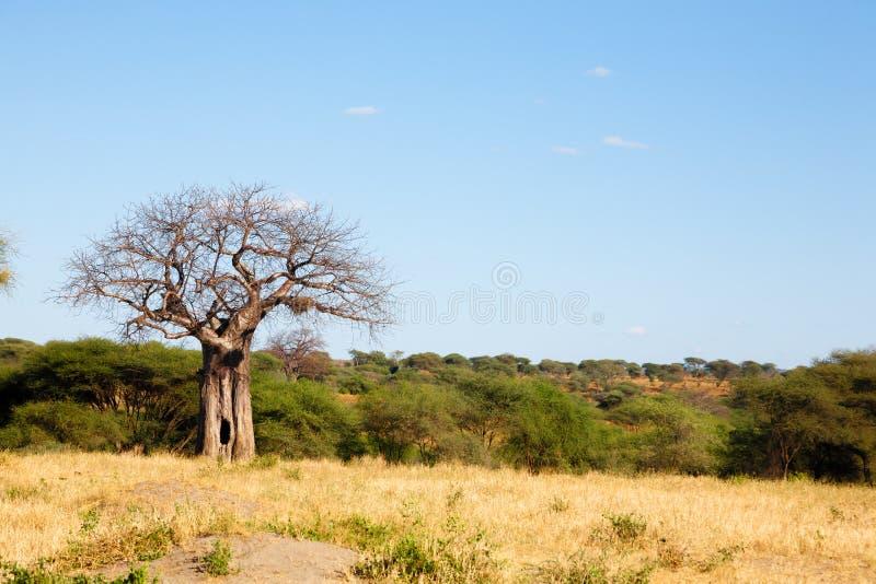 Tarangire National Park panorama, Tanzania, Africa stock images