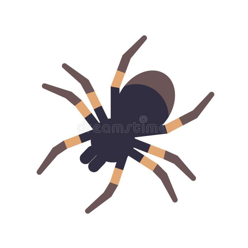 Tarantola isolata su fondo bianco Ragno velenoso tropicale domestico o aracnide pericolosa Esotico strano illustrazione vettoriale