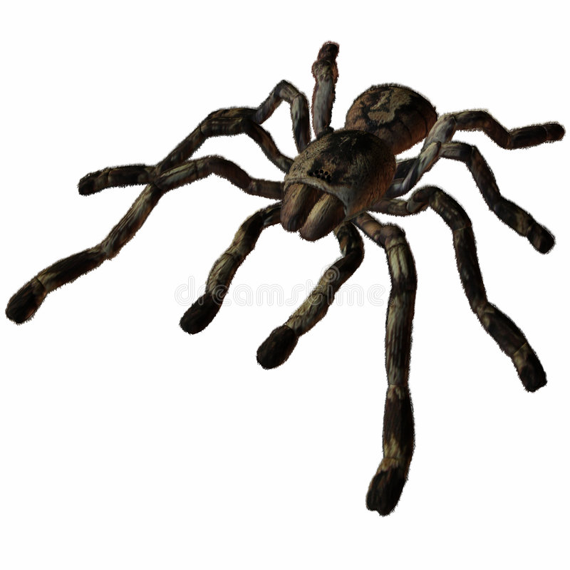 Tarantula stock illustratie