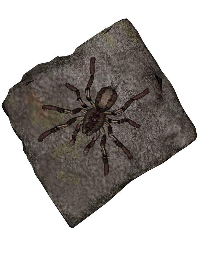 tarantula ilustracja wektor