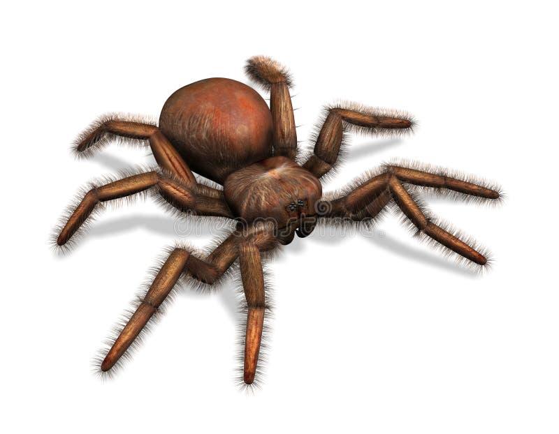 tarantula иллюстрация вектора