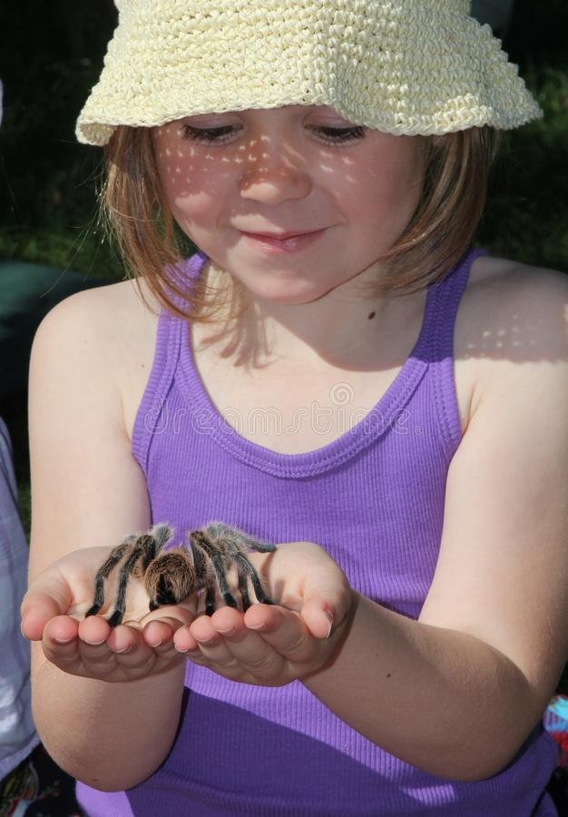 Tarantula de fixation d'enfant photo stock