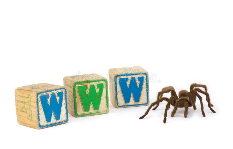 Tarantula met blokken WWW royalty-vrije stock fotografie