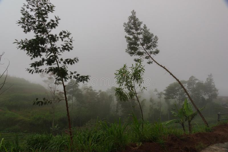 Tarasowa kultywacja w górach świeże trawa zieleni fotografia stock