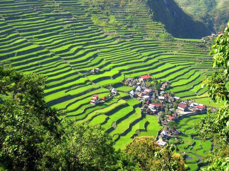 tarasowa ryż wioska obrazy royalty free