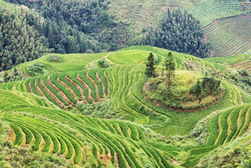 Download Tarasowaci Ryż Pola W Wiejskim Chiny Zdjęcie Stock - Obraz złożonej z lokacja, natura: 106901596