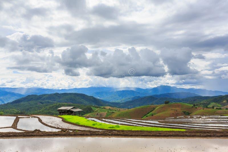 Download Tarasowaty Irlandczyka Pole W Dżem Wiosce, Chaingmai Prowincja, T Zdjęcie Stock - Obraz złożonej z farm, organicznie: 41955540