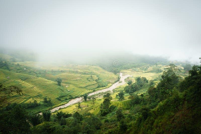 Tarasowaty ryżu pola krajobraz w zbierać sezon z niskimi chmurami w Y Ty, nietoperza Xat okręg, Lao Cai, północny wietnam obraz stock