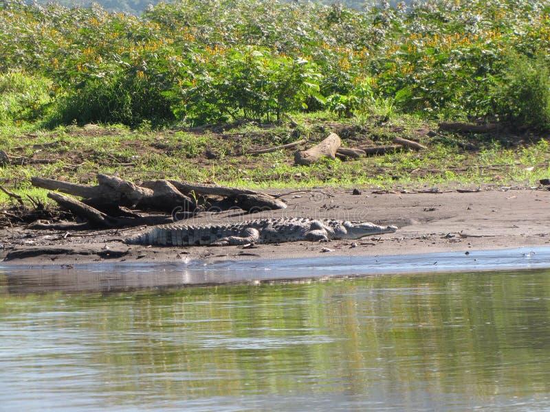 Tarcoles Costa Rica stockfotos
