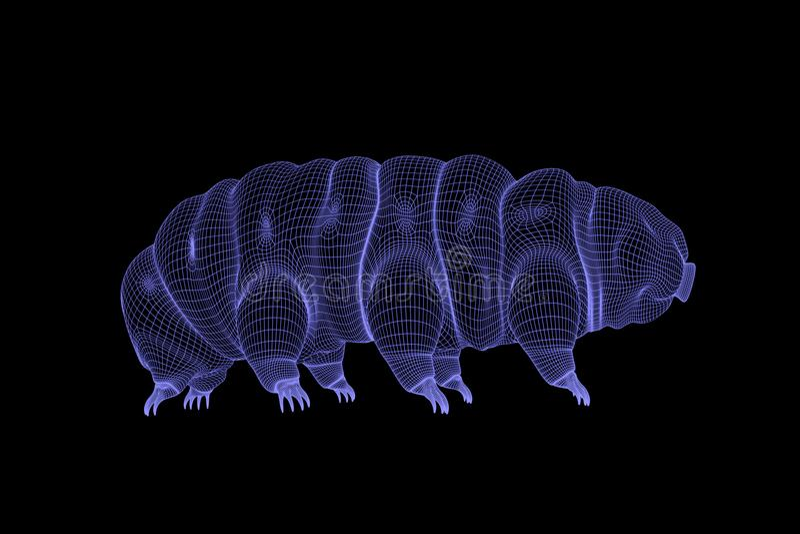 Tardígrado, representación del wireframe del oso 3d del agua en fondo negro ilustración del vector