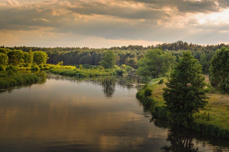 Tarde caliente del verano una vista del río con las costas herbosas, los árboles y un bosque denso debajo de un cielo nublado foto de archivo