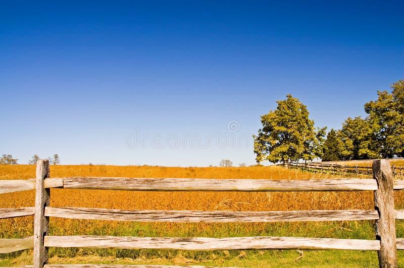 Tarde da queda no campo de trigo imagens de stock