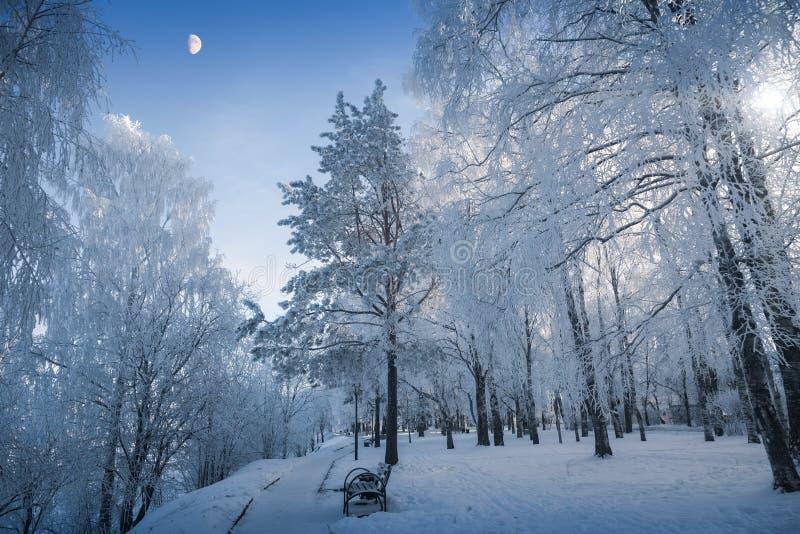 Tarde del invierno - el crepúsculo azul está recolectando en el parque fotos de archivo