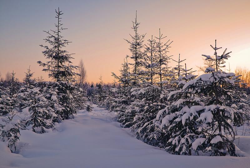Tarde del invierno en el bosque fotos de archivo libres de regalías