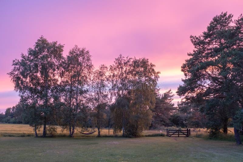 Tarde del verano en Suecia imagen de archivo