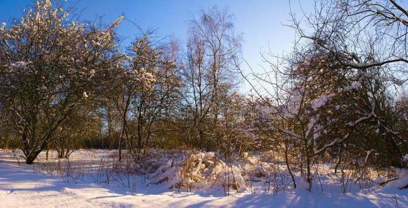 Tarde do inverno imagens de stock