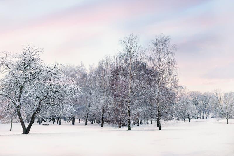 Tarde en el bosque nevado del invierno imagen de archivo