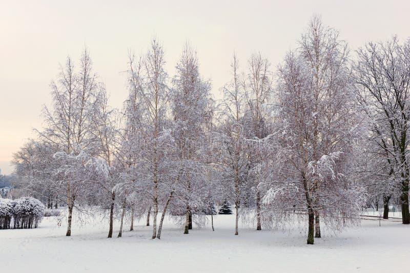 Tarde en el bosque nevado del invierno foto de archivo libre de regalías