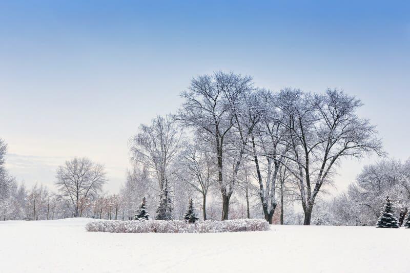 Tarde en el bosque nevado del invierno imagenes de archivo