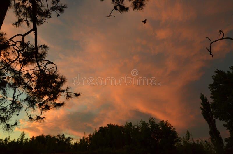 Tarde en el cielo & x28; zmierzch w sky& x29; obrazy royalty free