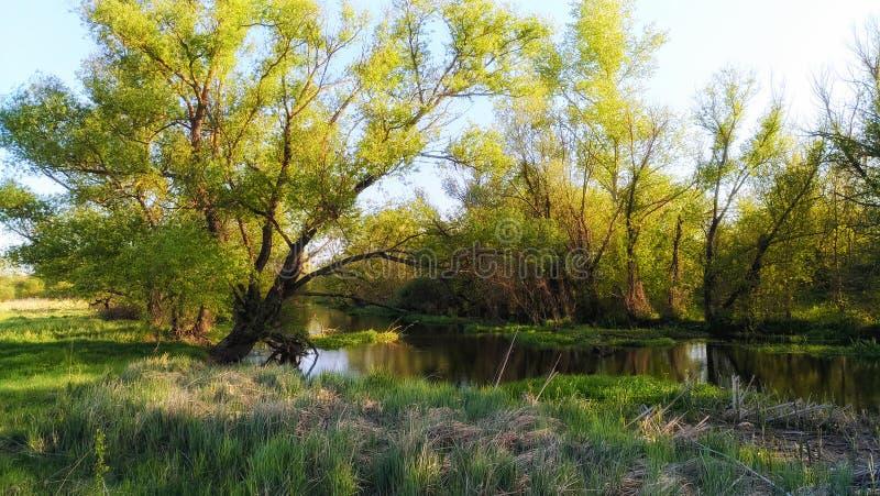 Tarde en el río fotografía de archivo