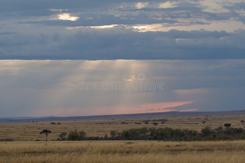 Tarde en Masai Mara, Kenia fotografía de archivo libre de regalías