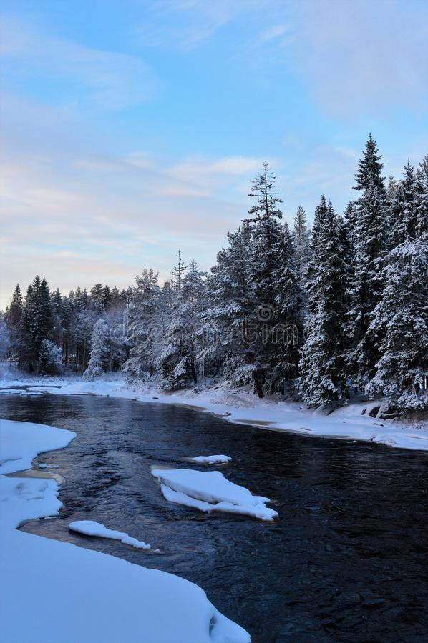 Tarde fría del invierno en los rápidos de Koiteli Río congelado, bosque denso de la picea imagen de archivo libre de regalías
