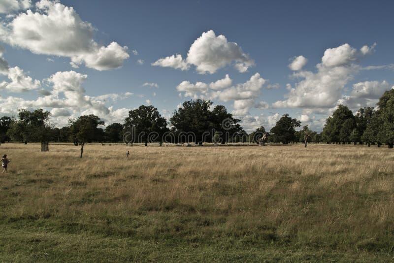 Tarde maravilhosa em Richmond Park fotografia de stock