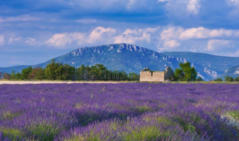 Tarde ventosa em Provence imagem de stock