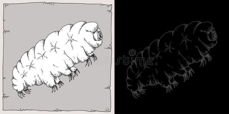 Tardigrade images libres de droits