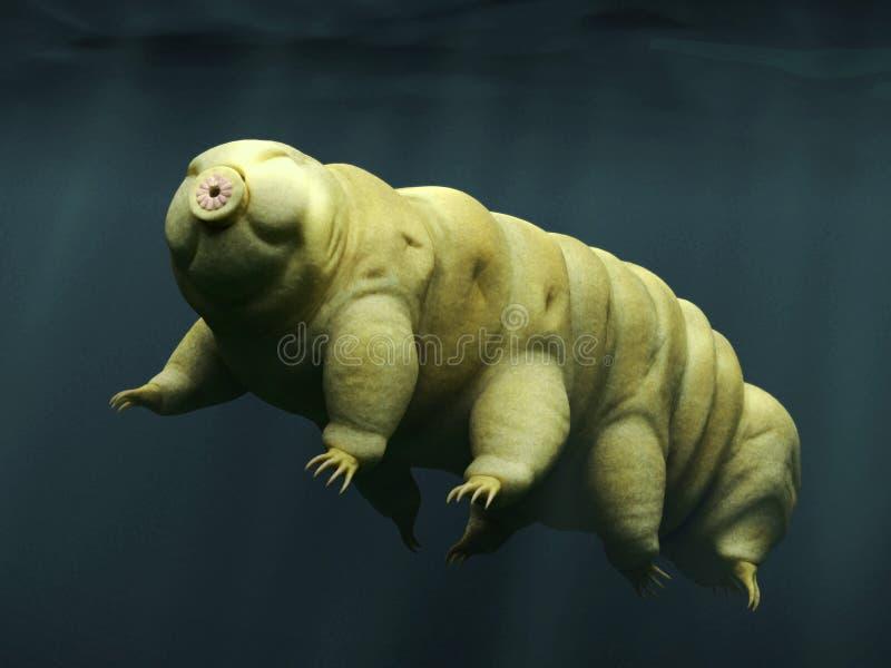Tardigrade, zwemmende water draagt stock foto