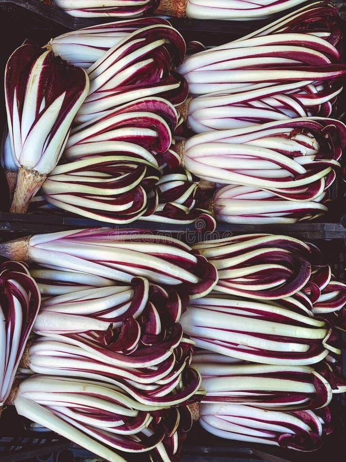 Tardivo do Radicchio, chic?ria vermelha italiana, vegetais saud?veis da salada vermelha no mercado fotos de stock