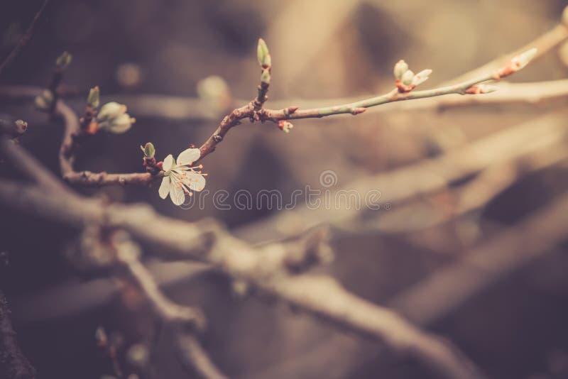 target1887_0_ kwiat fotografia royalty free