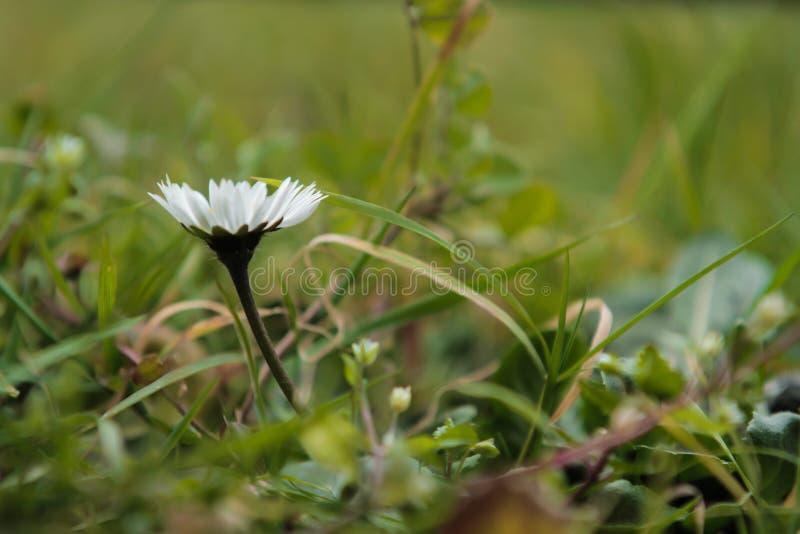target1887_0_ kwiat zdjęcia stock