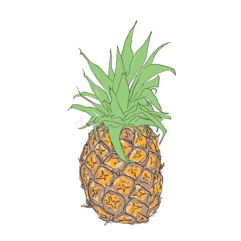TARGET771_1_ na ścianie Tropikalna owoc na białym tle ilustracji