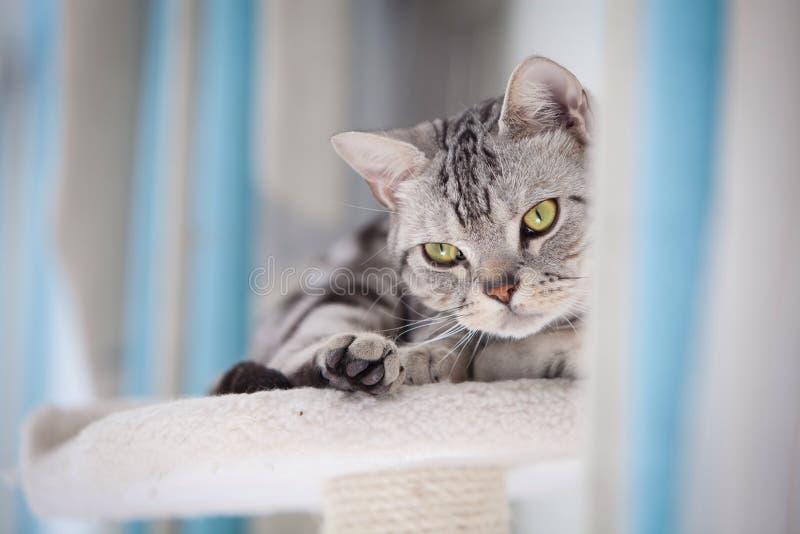 TARGET507_0_ przy kamerę Tabby kot obrazy royalty free