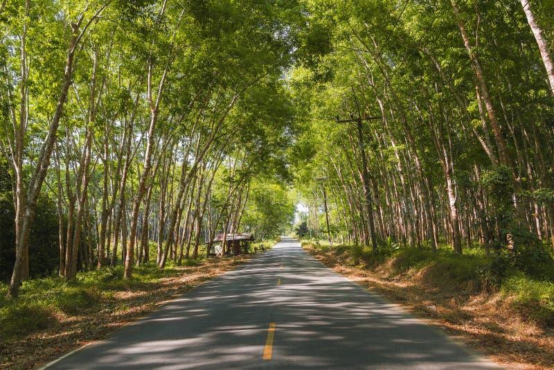 TARGET37_0_ samochodem Asfaltowa droga w?r?d gumowego lasu w Tajlandia, Phuket Lato przygoda niesamowite krajobrazu zdjęcie stock