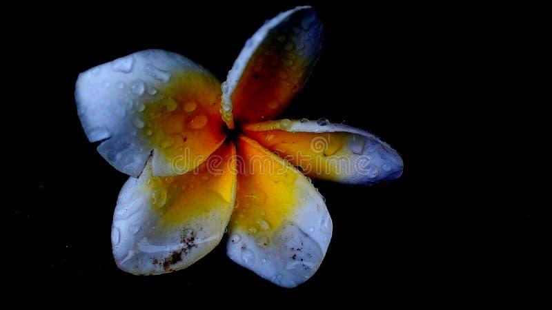 target900_0_ tło kwiat sia słonecznika fotografia royalty free