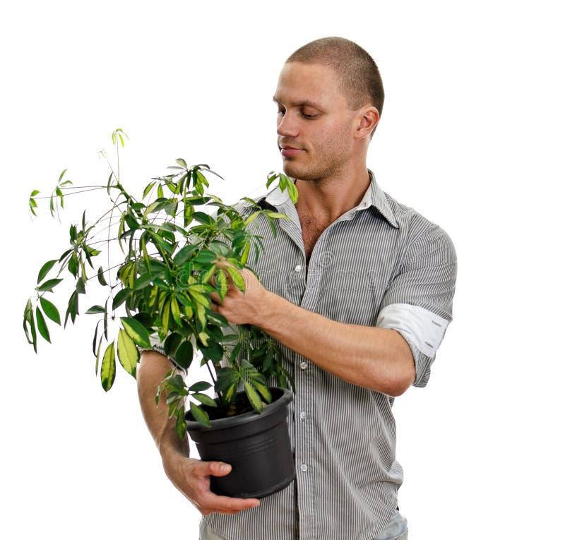 target1273_1_ mężczyzna rośliny garnek fotografia stock